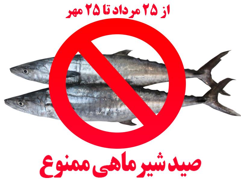 ممنوعیت صید ماهی شیر به روش گوشگیر از ۲۵مراد به مدت شصت روز