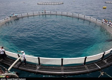 پرورش ماهی در قفس گامی موثر در جهش تولید استان هرمزگان