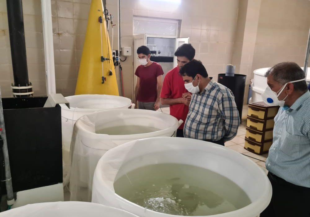 تولید ۵۰ هزار تن ماهی در دریا منتظر حمایت ویژه