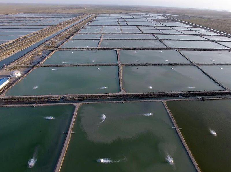 پیوستن مزرعه ۹۰هکتاری در جزیره قشم به چرخه تولید
