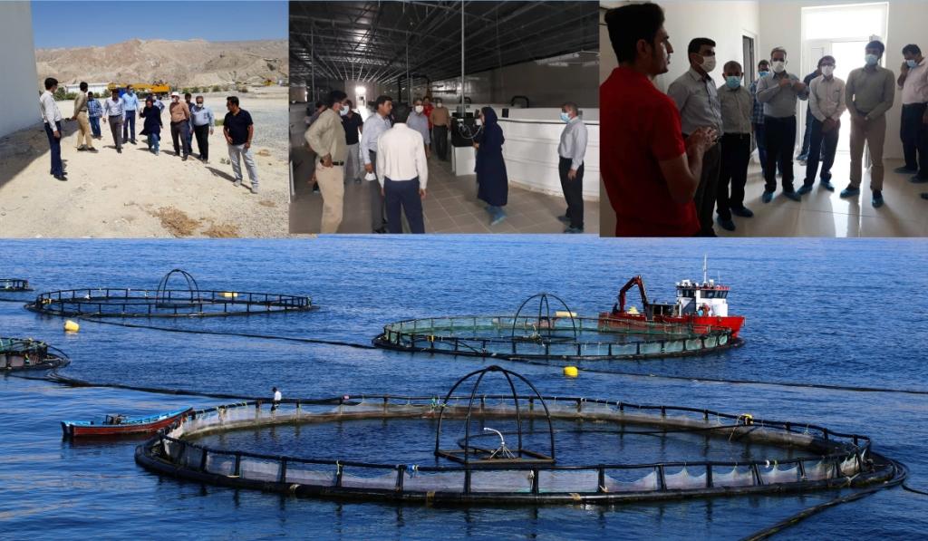 بندرلنگه قطب اصلی پرورش ماهی در قفس کشور / آینده ای درخشان در انتظار پرورش ماهی در قفس در بندرلنگه