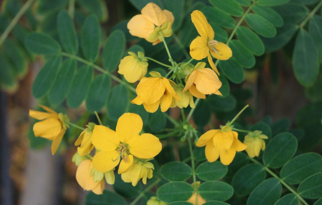 هرمزگان یک هزار گونه گیاهی دارد/ حفظ گونه های گیاهی د رمعرض خطر برای بانک جهانی ژن الویت ماست