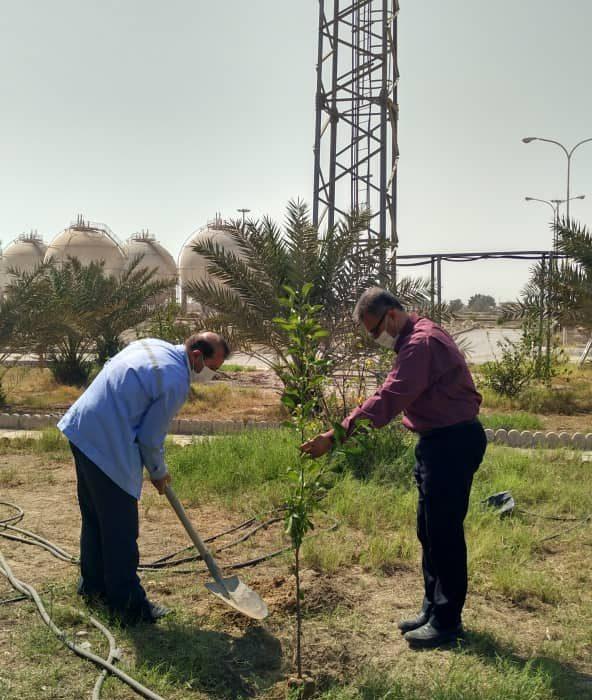 گرامیداشت روز درختکاری در منطقه خلیج فارس