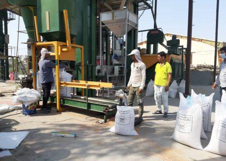 توزیع بذر گندم اصلاح شده در حاجی آباد آغاز شد